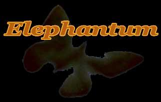 ELEPHANTUM